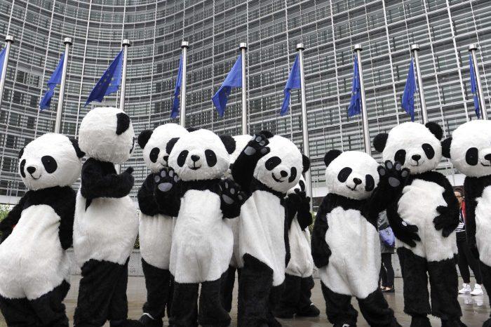 The Diplomatic Panda