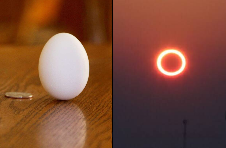 The standing egg theory and the 'ring-of-fire' eclipse