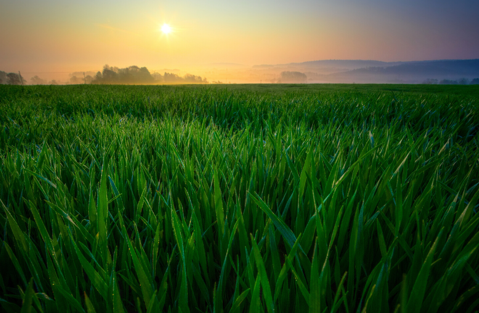Pakistan Becomes the World's First Country to Launch a Smart Agriculture Project